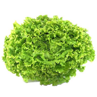 Salāti zaļie Gentille